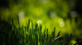 Grass Wallpaper For Desktop
