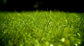 Grass Wallpaper For PC