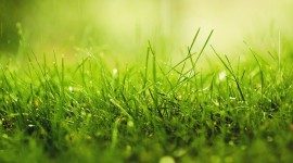 Grass Wallpaper Free
