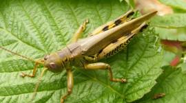 Grasshoppers Wallpaper For Desktop