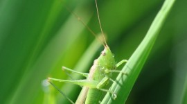 Grasshoppers Wallpaper For IPhone