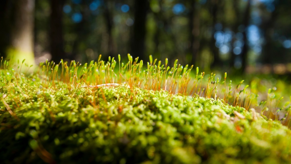 Green Moss wallpapers HD