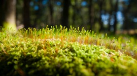 Green Moss Best Wallpaper