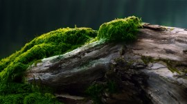 Green Moss Photo Download