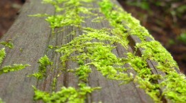 Green Moss Wallpaper For Android
