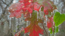 Icicles Photo Download