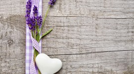 Lavender Wallpaper Download Free