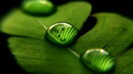 Macro Photography Wallpaper