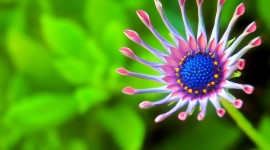 Macro Photography Wallpaper Download Free