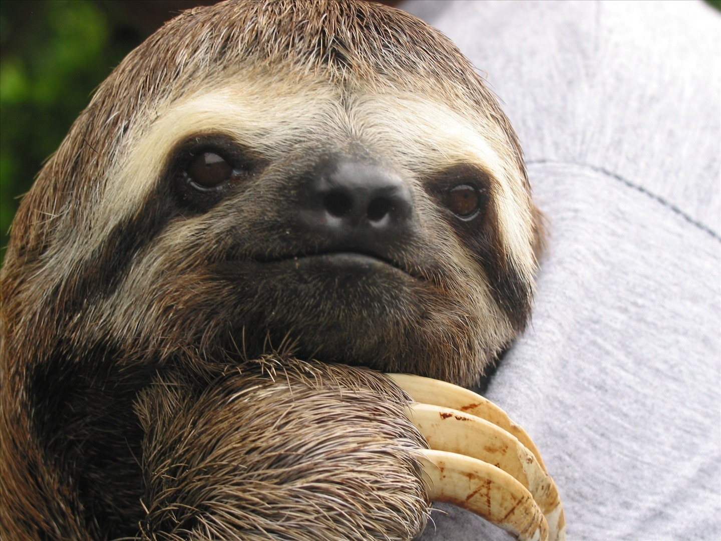 sloth wallpapers high quality download free