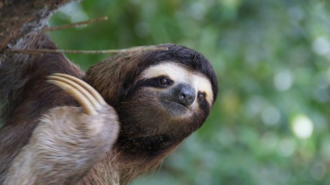 Sloth wallpapers high quality