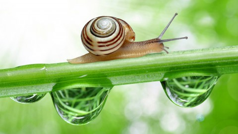 Snail wallpapers high quality
