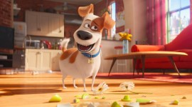 The Secret Life Of Pets Picture Download