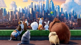 The Secret Life Of Pets Wallpaper