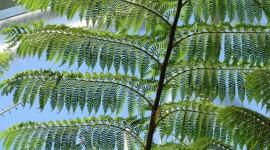 Tree Fern Wallpaper For PC