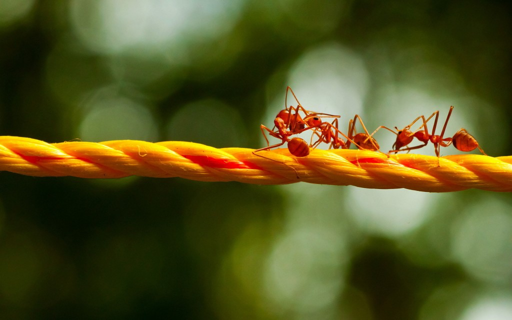 4K Ants wallpapers HD