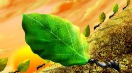 4K Ants Image