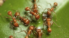 4K Ants Photo Download
