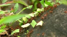 4K Ants Wallpaper