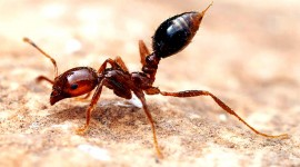 4K Ants Wallpaper Download
