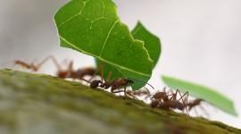 4K Ants Wallpaper Free