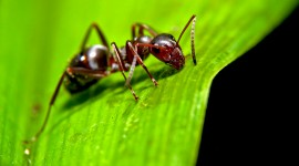 4K Ants Wallpaper Gallery
