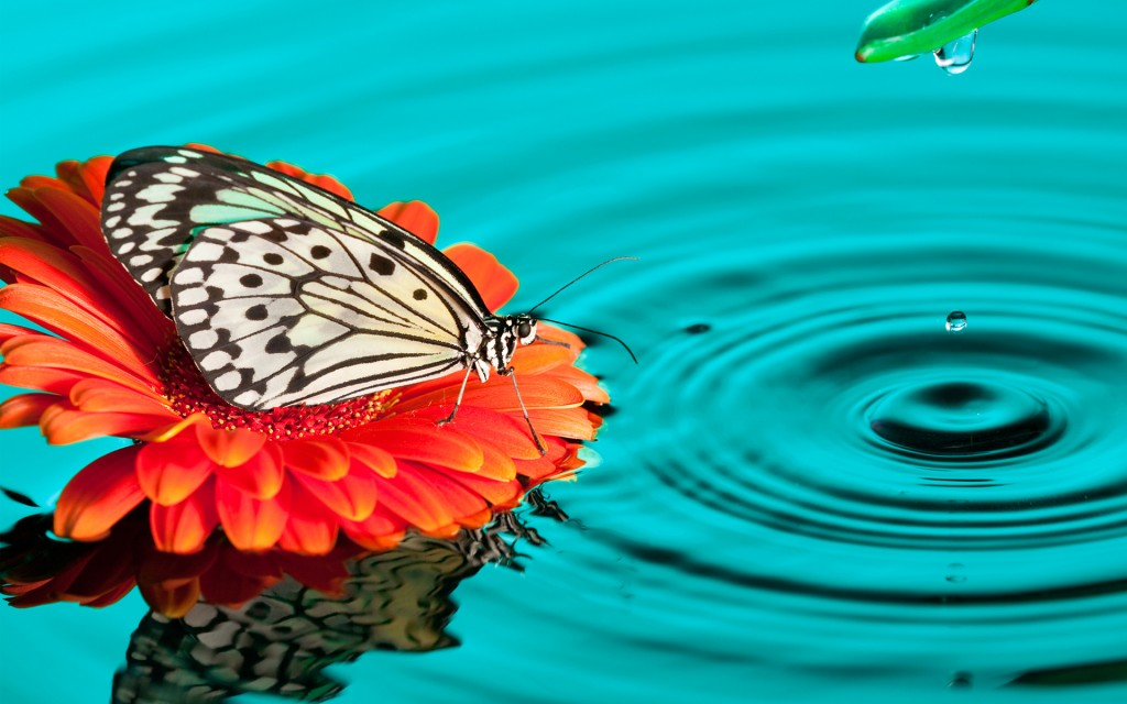4K Butterfly wallpapers HD