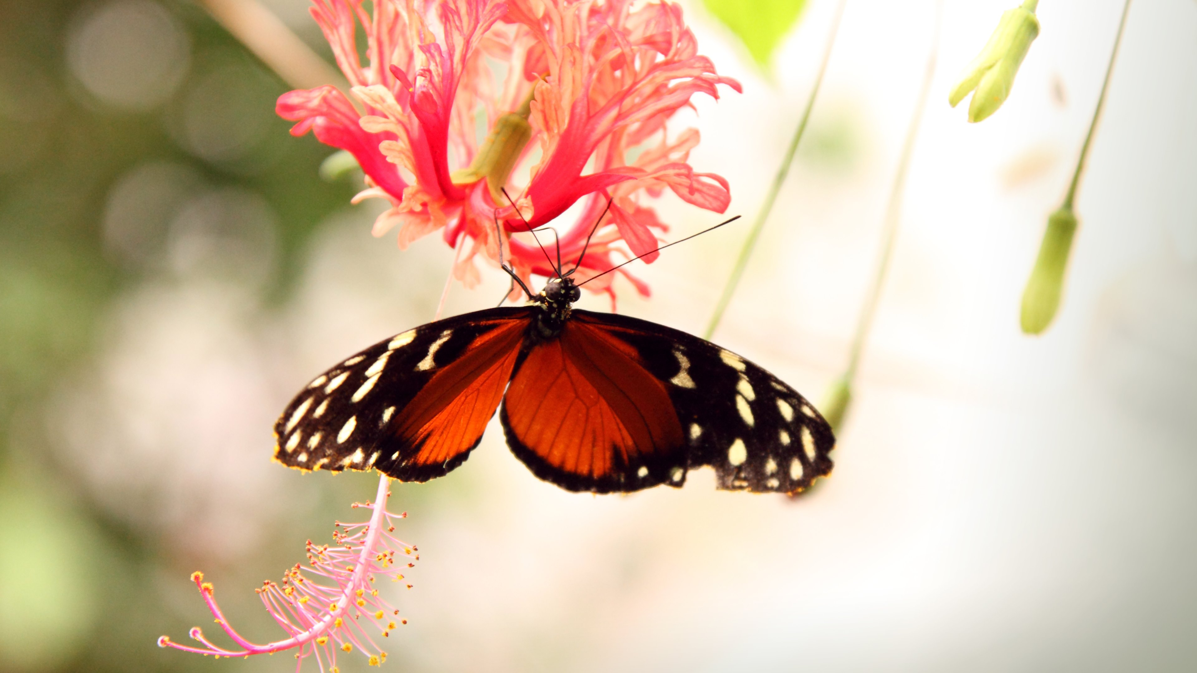 4k Butterfly Wallpapers High Quality Download Free
