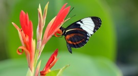 4K Butterfly Photo