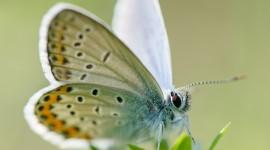 4K Butterfly Photo Free