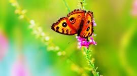 4K Butterfly Photo#1