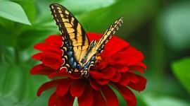 4K Butterfly Photo#3