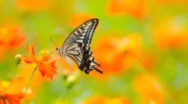 4K Butterfly Pics