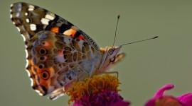 4K Butterfly Pics#1