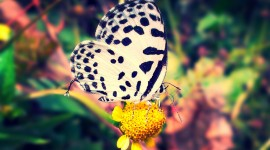 4K Butterfly Wallpaper Download