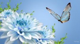4K Butterfly Wallpaper Download Free