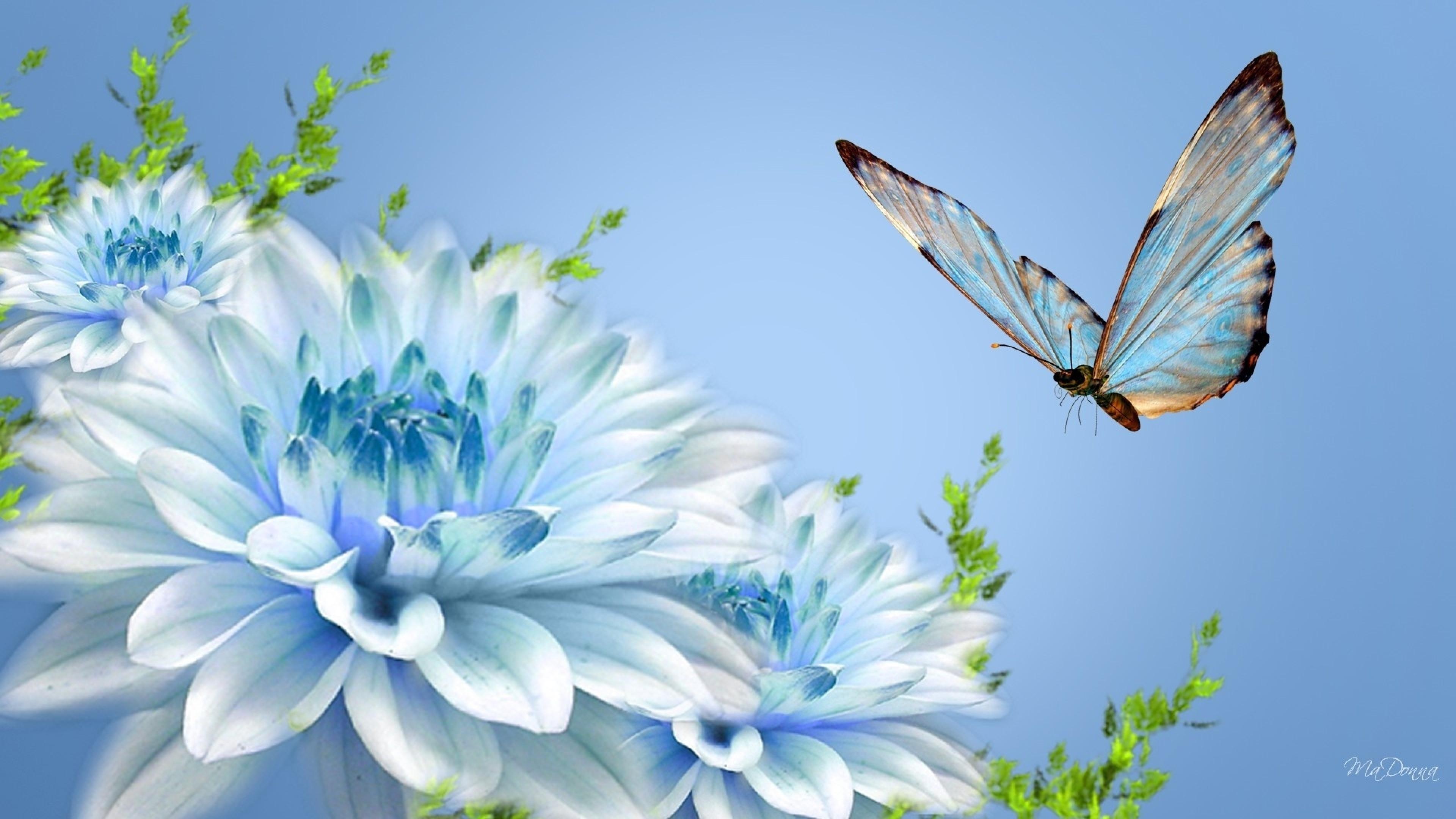 4K Butterfly Wallpaper Download Free