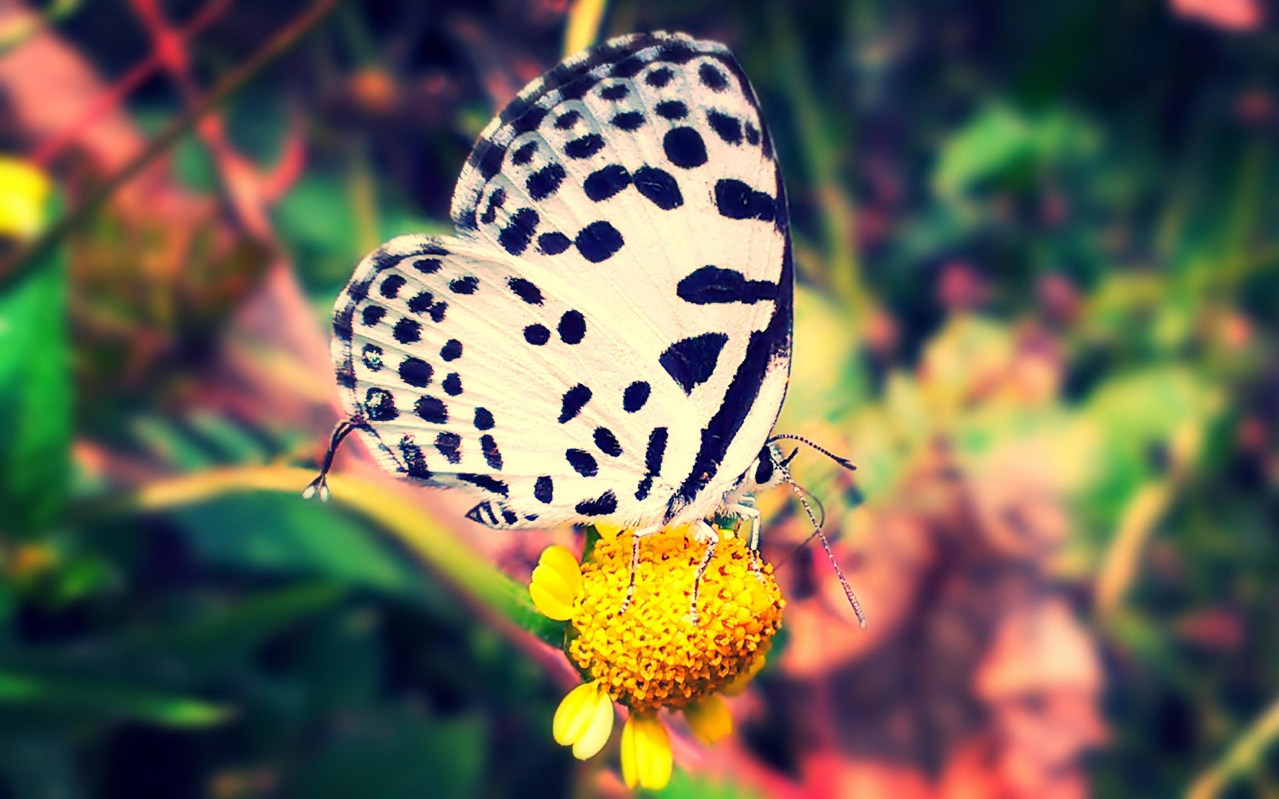4k Butterfly Wallpaper Aoutos Hd Wallpapers
