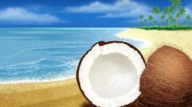 4K Coconuts Desktop Wallpaper For PC