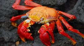 4K Crabs Desktop Wallpaper