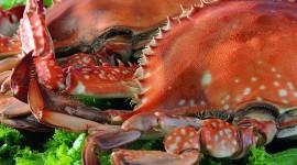 4K Crabs Photo