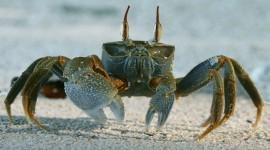 4K Crabs Photo Free