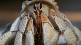 4K Crabs Photo Free#1