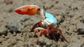 4K Crabs Photo Free#2