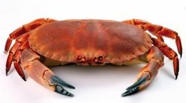 4K Crabs Photo#1