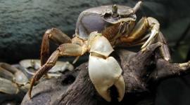 4K Crabs Wallpaper