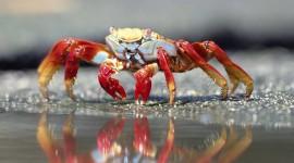 4K Crabs Wallpaper Download
