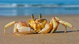 4K Crabs Wallpaper Full HD