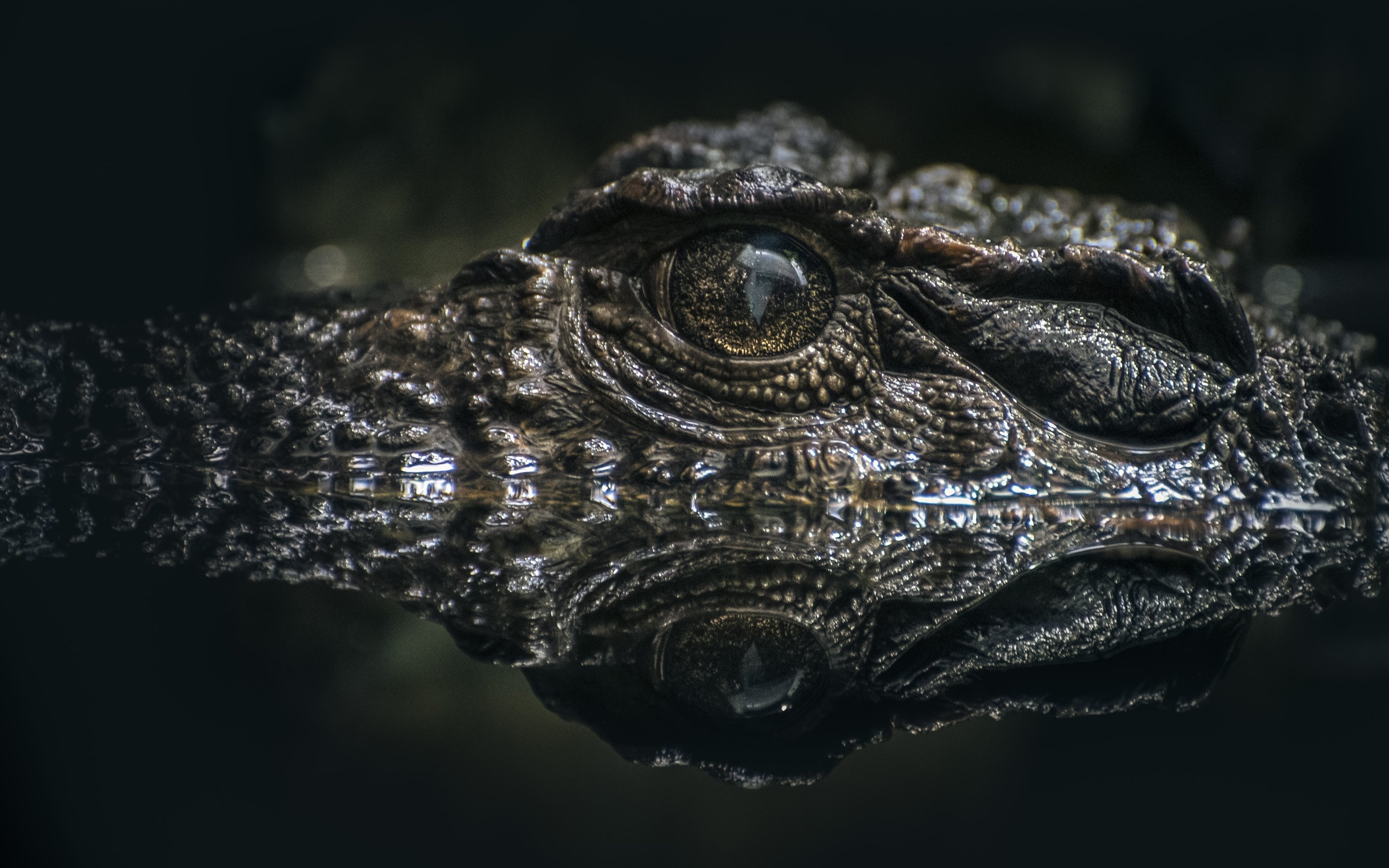 4K Crocodiles Wallpapers High Quality | Download Free