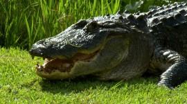 4K Crocodiles Desktop Wallpaper For PC